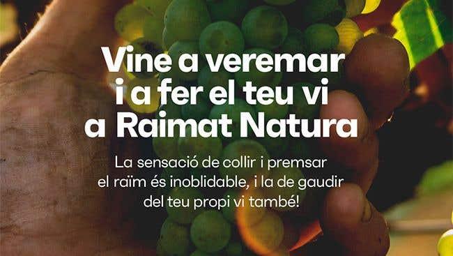 Experience harvest at Raimat